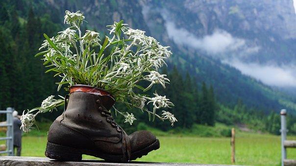 Gentian, Shoe, Mountains, Thal, Nature, Landscape