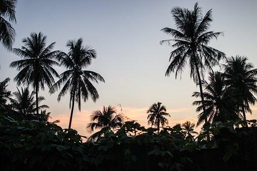 Palm Trees, Paradise, Horizon, Tropics, Vacations, Sky