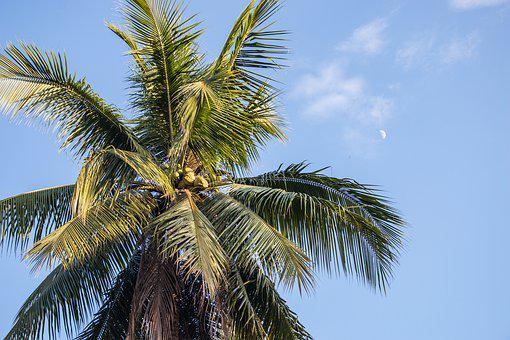 Palm, Paradise, Sky, Moon, Tropics, Vacations, Travel
