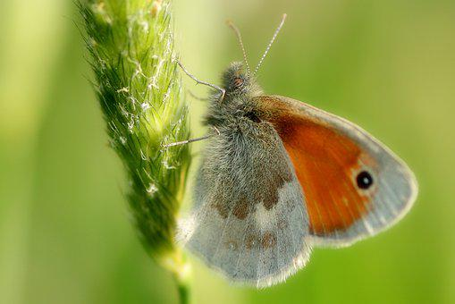 Butterfly, Orange, Insect, Nature, Animal, Wing