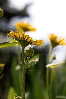 Flowers, Yellow Flowers, Yellow, Green, Petals, Blossom