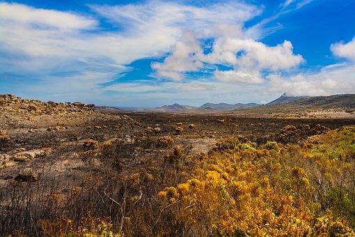 Landscape, Africa, Nature, Savannah, Safari, Desert