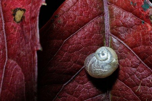 Snail, Macro, Nature, Animal, Garden, Background