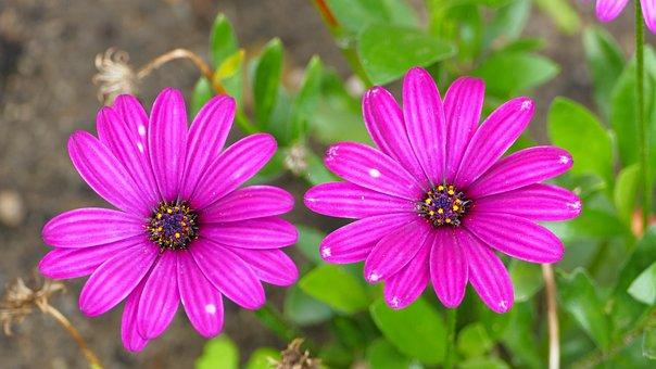 Flowers, Summer, Nature, Garden, Beautiful, Plant, Pink