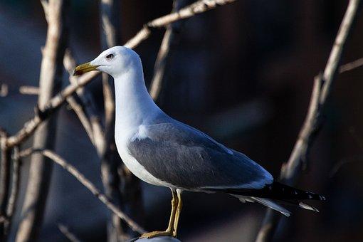 Seagull, Nature, Animal, Sea, Bird, Feather, Flight