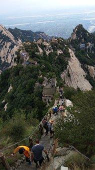 Pinus Armandii, Black Dragon Ridge, China