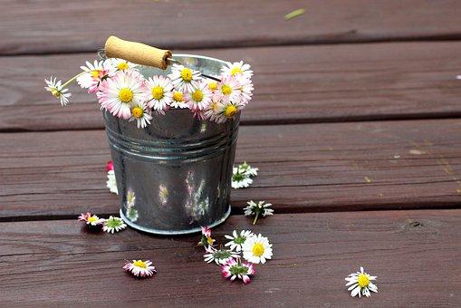 Daisies, Broken, Pluck, Spring, Flowers, White, Fresh