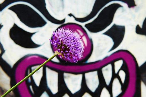 Garlic Purple, Flower, Wall, Graffiti, Posts