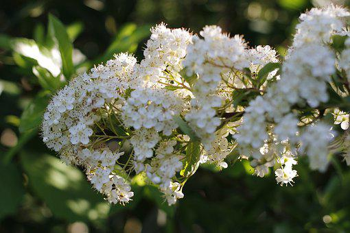 Spring, Flowers, Sun, Fiori Di Pesco