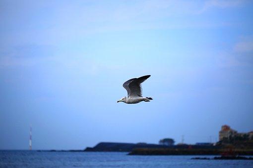 Seagull, Sea, Animal, Nature, Flight, New, Birds, Fly