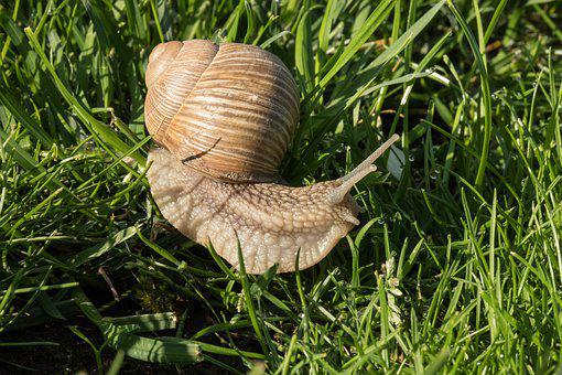 Snail, Tim H, Nature, Grass, In The Morning