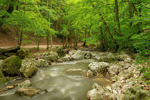 Stream, Green, Forest, Hiking, Nature