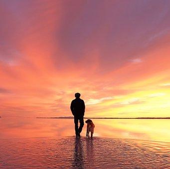Dog, Man And His Dog, Labrador, Bonneville, Wendover