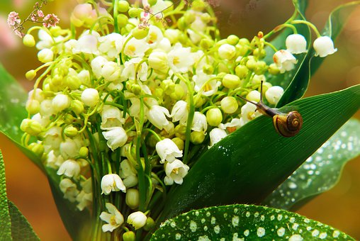 Lily Of The Valley, Flower, Forest, Foliage, Spring