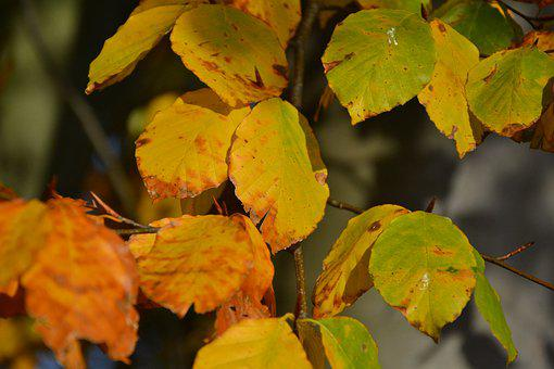 Leaves, Autumn, Yellow, Green, Brown, Nature, Forest