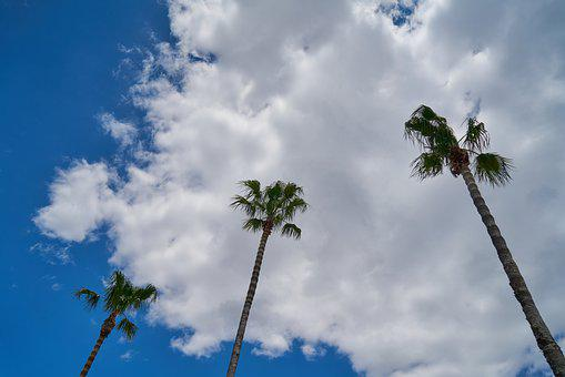 Palm, Tree, Nature, Palmer, Tropical, Landscape, Summer