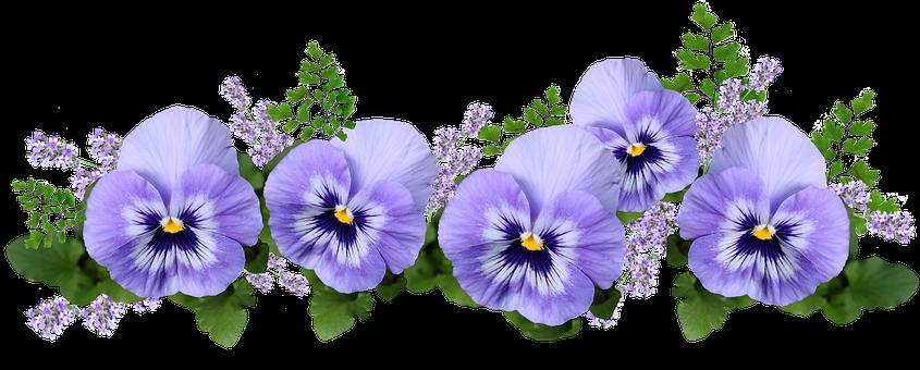 Flowers, Pansies, Lavender, Maiden Hair Fern