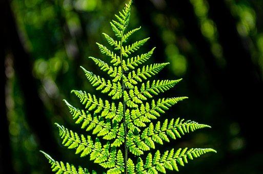 Fern, Light, Undergrowth, Green, Nature, Silhouette