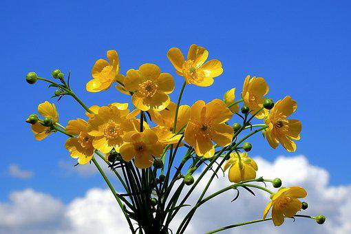 Your Marigolds, Flowers, Sky, The Background, Clouds