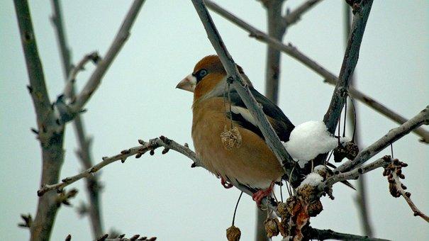 Bird, Winter, Tree, Nature, Snow, The Atmosphere