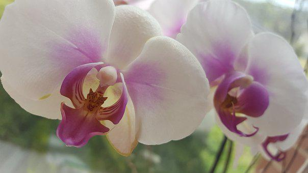 Pink, Flowers, Nature, Spring, Blossom, Bloom, Summer
