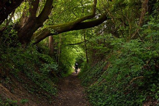 Forest, Trees, Nature, Landscape, Path, Mystical