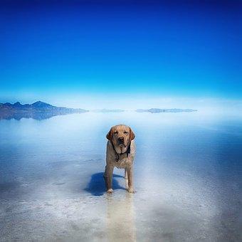 Dog, Gunner, Salt Flats, Bonneville, Utah, Wendover