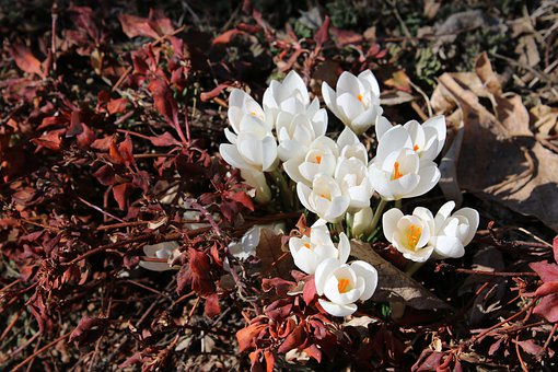 Flowers, Small Flower, Spring, Blossom, White, Blooming