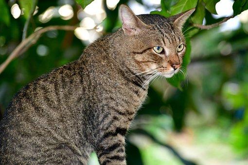 Cat, Felis, Pet, Felidae, Wild, Carnivore, Portrait