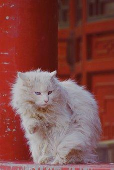 Cat, Red, Kitten, Animal World, China, Cute, Baqi