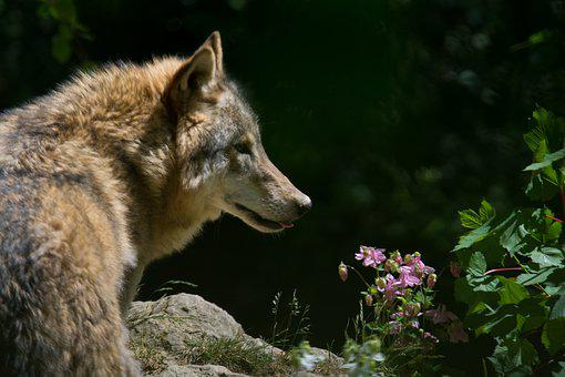 Wolf, Zoo, Wild Animal, Animal World, Animals, Nature