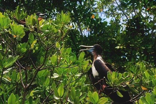 Pelican, Birds, Sea, Animals, Nature, Plumage, Wing