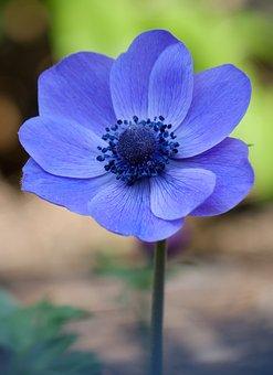 Blossom, Bloom, Violet, Flower, Bloom, Garden, Blue