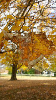 Yellow, Fall Leaves, Autumn, Color, Tree, Colorful