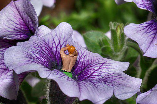 Flower, Figure, Miniature, Plant, Macro, Summer
