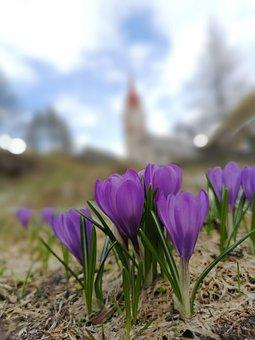 Flowers, Bloom, Spring, Flower, Nature, Flora, Church