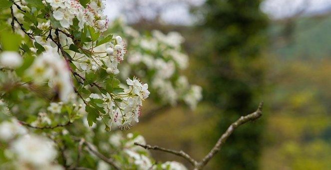 Flowers, Tree, Nature, Dark, Night, Plant, Color, Fog