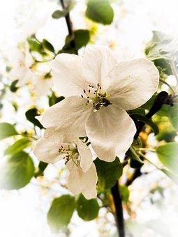 Tree, Flower, White, Beautiful, Green, Leaves, Cute
