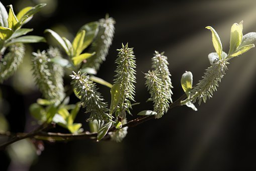 Branch, Spring, Nature, Grow, Leaves, Green, Lighting