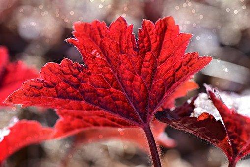 Leaf, Plant, Foliage, Vein, Pattern, Nature, Garden