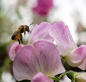 Bee, Macro, Flower, Insect, Pollen, Blossom, Bloom