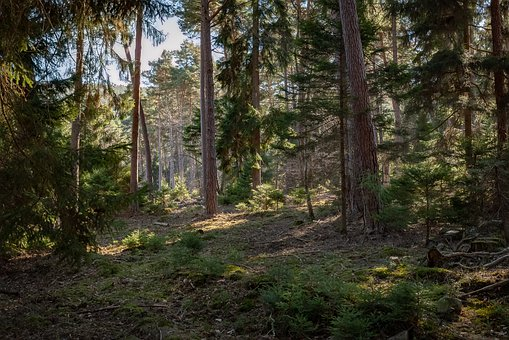 Forest, Climate Protection, Nature, Responsibility