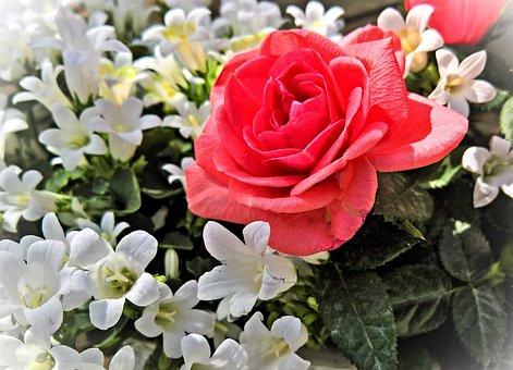 Flowers, Roses, Bluebells, Campanula, Ornamental Plants