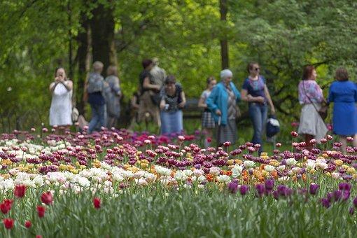 Tulips, Festival, Spb, Peter, Russia, Killarney, Beauty