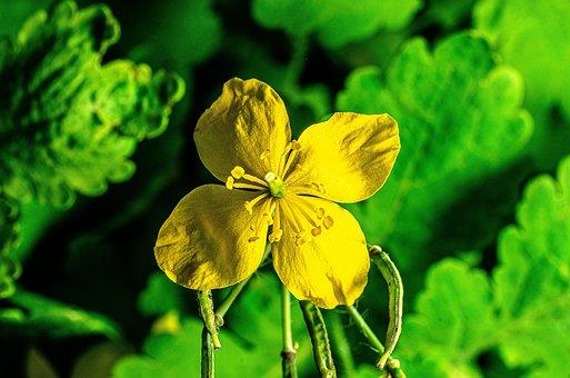 Flower, Garden, Yellow, Spring, Petals, Flora