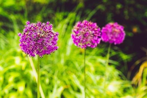 Flowers, Three, Spring, Garden, Bloom, Morning, Floral