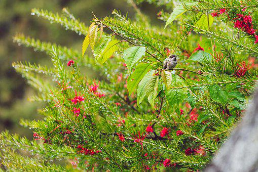 Hummingbird, Bush, Wild, Bushes, Small, Outdoor, Spring