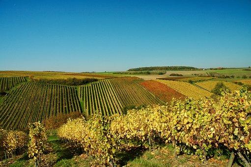 Vines, Autumn, Wine, Winegrowing, Grapes, Vine