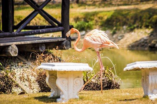 Flamingo, Nature, Colombia, Animals, Landscape