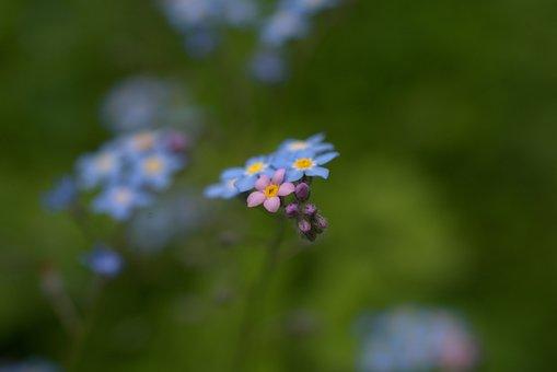 Flower, Blossom, Bloom, Small, Garden, Flora, Summer